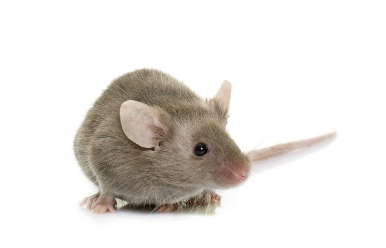 rodent control and prevention services
