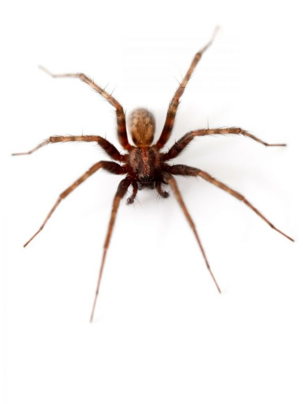 spider control and prevention