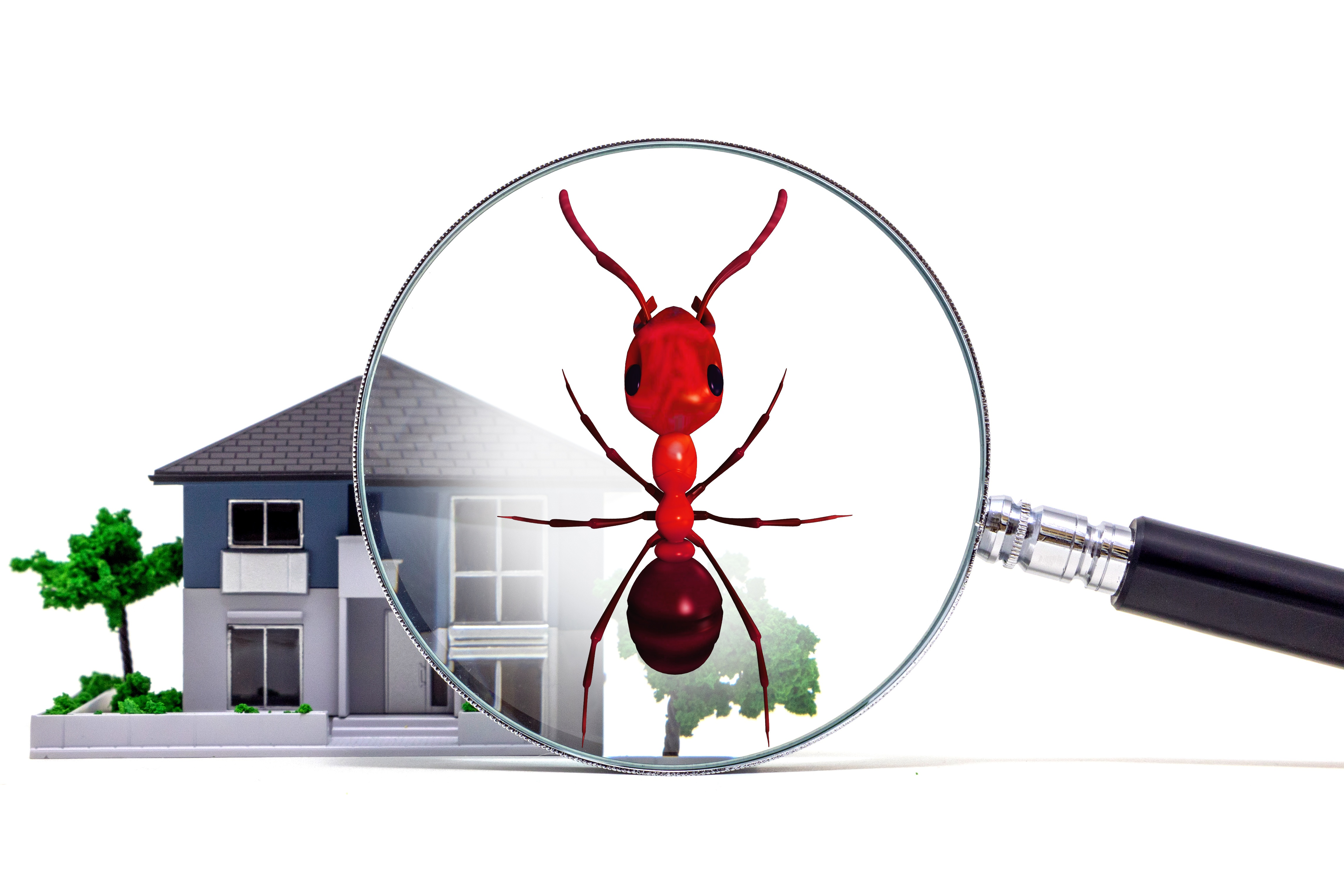 Top 4 Pests You Don't Want, troy mo pest and termite servicesaround the clock pest control, residential pest control, quarterly pest control,