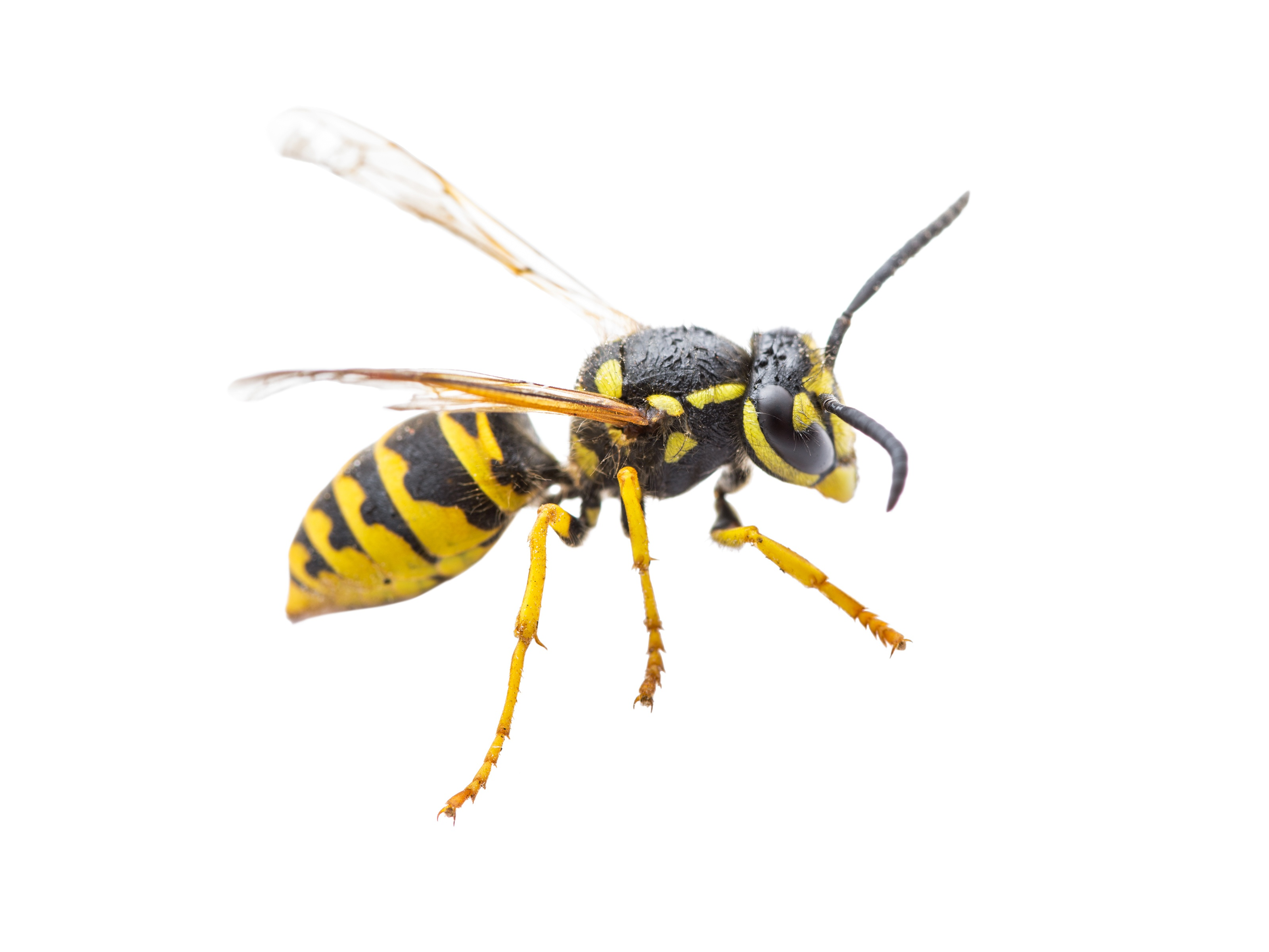 Wasp vs. Hornet - Whats The Difference?, Top 5 Pests Campers Face