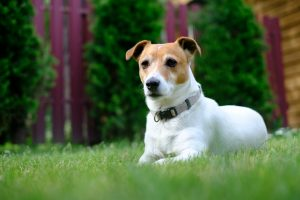are spiders dangerous to your pets