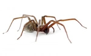 Tips For Camping Pest Free, spider, Top 5 Pests Campers Face, around the clock pest control, 24 hour pest control