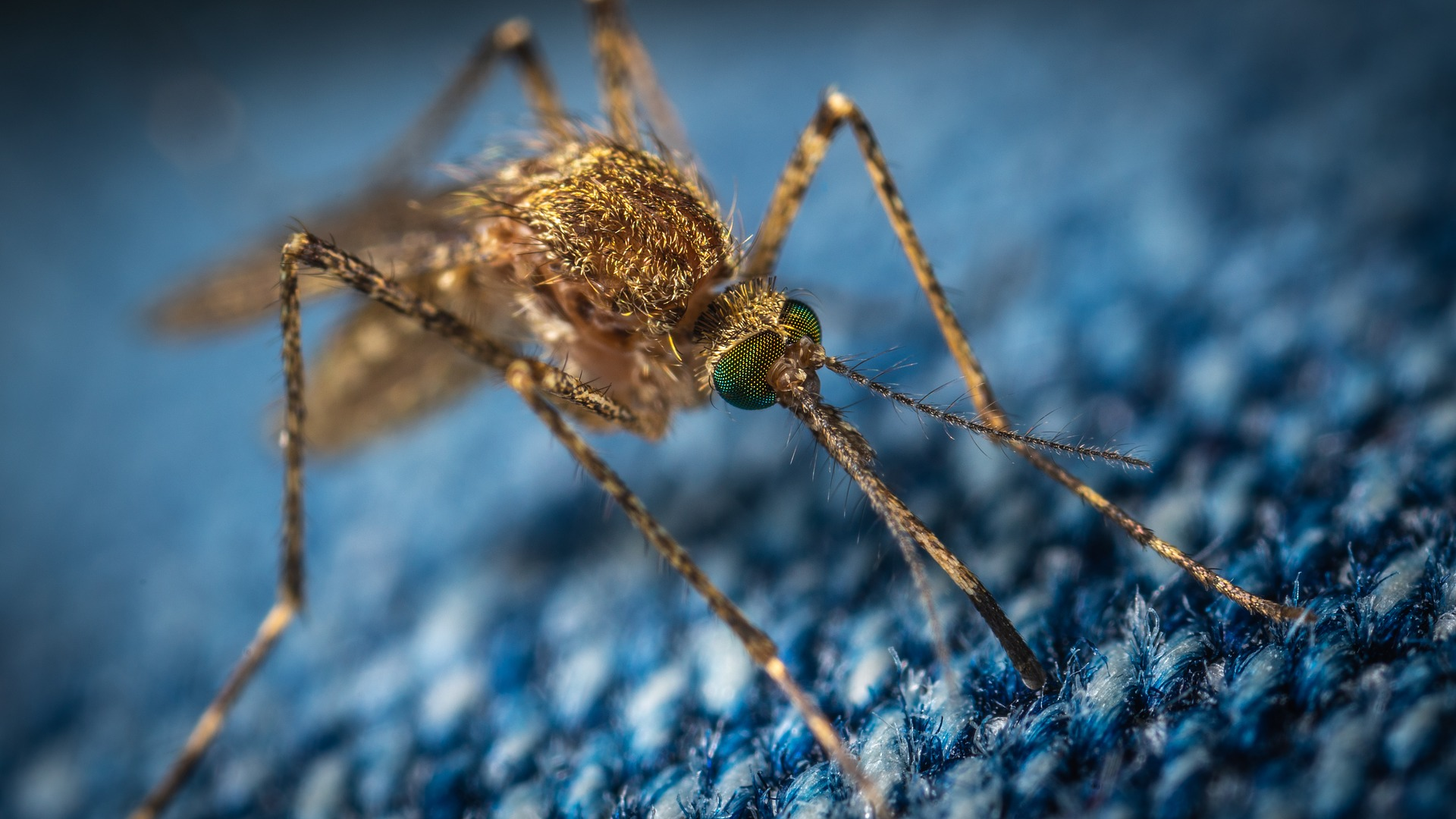 avoid these 3 mosquito control devices