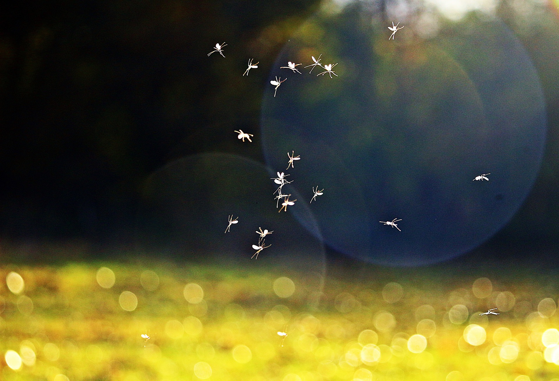 Does Natural Pest Control Work, around the clock pest control