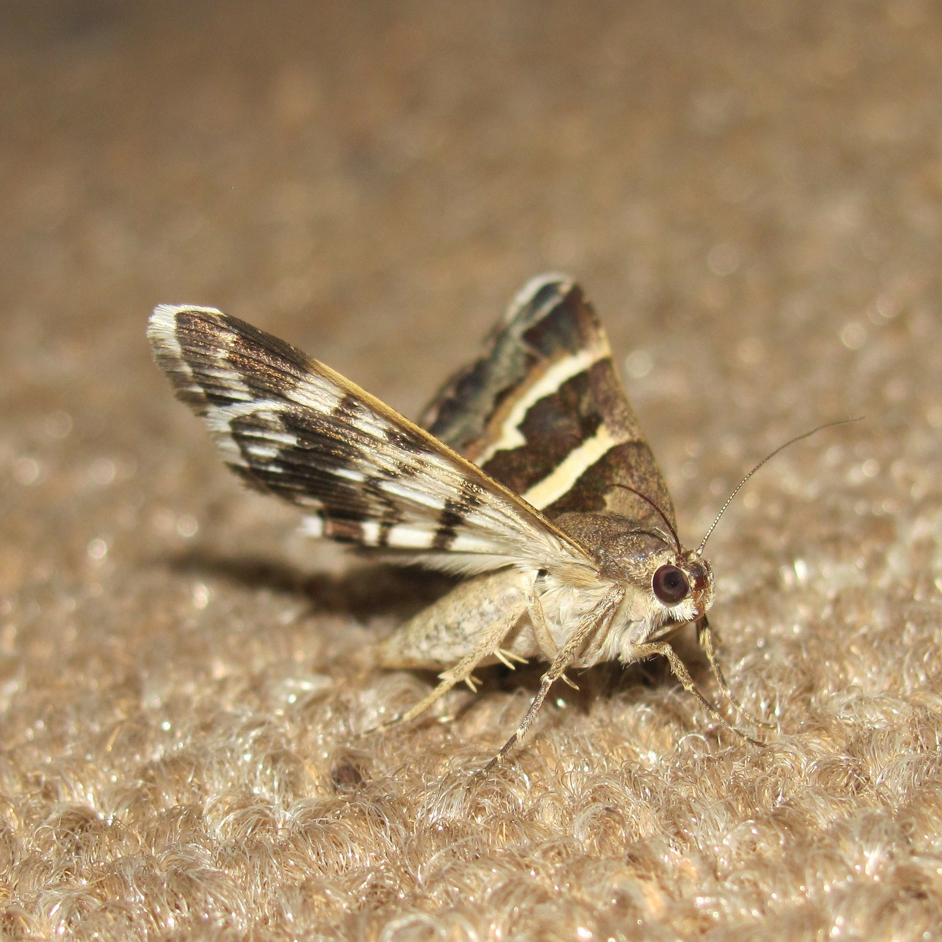 how to stop moths from eating your clothes, around the clock pest control
